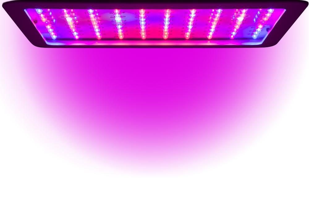 Beste Beleuchtung für Indoor Growing 2020  
